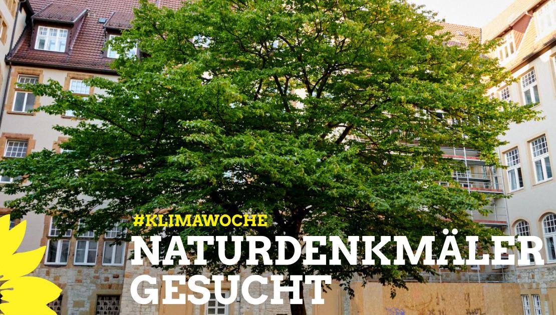 Wir suchen eure Lieblingsbäume!